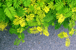 Yellow and green leaf background. At sideway Royalty Free Stock Photos