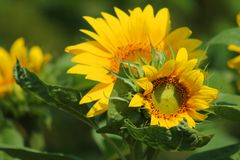 Yellow and Green Leaf Flower during Daytime Royalty Free Stock Photos