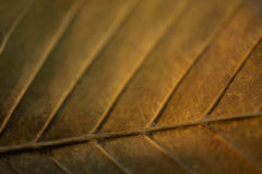Yellow green leaf Stock Photography