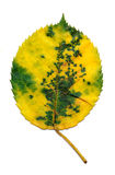 Yellow and Green Leaf Stock Photography