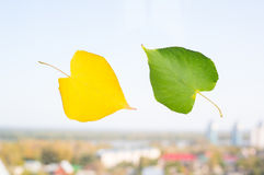 Yellow and green leaf on the window on the background of the city blurred. Stock Images