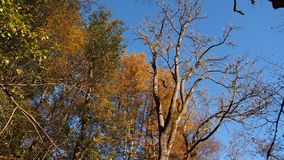 Autumn trees and leaves Royalty Free Stock Photos