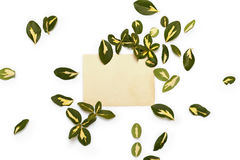 Yellow-green leaves of euonymus arranged around vintage card Stock Photo