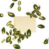 Yellow-green leaves of euonymus arranged around vintage card Royalty Free Stock Photography