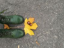 Yellow and green. Legs with maple leaves and chestnuts Royalty Free Stock Image
