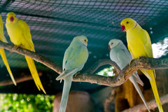 Yellow and green macaw red beak Royalty Free Stock Photos