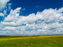 Yellow-green Meadow Royalty Free Stock Photos