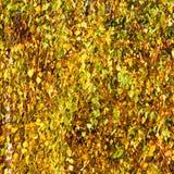 Yellow, green and orange Autumn leaves  Stock Photo