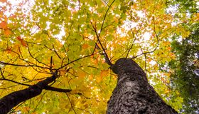 Yellow, green, and orange leaves of many treetops stock photography