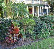 Historic Landscaped Mansion Tampa Florida. Yellow and green painted house with lush professional landscaping and wrought iron fence, circular street lights, palm stock image