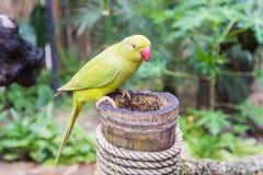 Yellow-green parrot in bird park Stock Photos