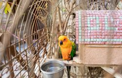 Yellow green parrot in cage at Monastery of St Gerasimus. Israel stock photos