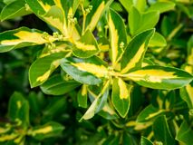 Yellow and Green Plant Leaves Royalty Free Stock Photos