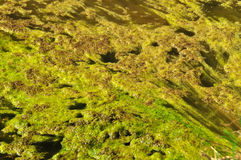 Yellow and green - polluted water. Green and yellow - polluted water royalty free stock image