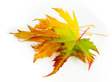 Yellow, green and red autumn leaves Royalty Free Stock Photos