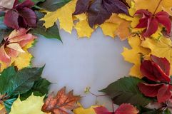 Yellow green and red autumn leaves on the table royalty free stock photos
