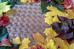 Yellow green and red autumn leaves on the table stock photos
