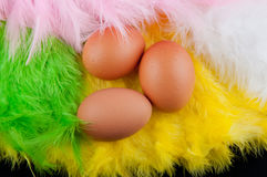 Yellow, green, rose, white color eathers and three brown eggs inside. Yellow, green, rose, white color feathers and three brown eggs inside. Top view Royalty Free Stock Photo