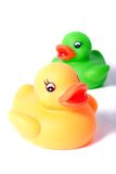 Yellow and green rubber ducks Stock Images