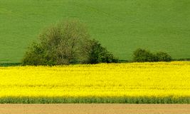 Yellow and green spring field in countryside Royalty Free Stock Photography