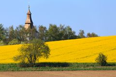 Yellow and green spring field in countryside Royalty Free Stock Images