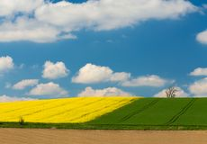 Yellow and green spring field Royalty Free Stock Photos