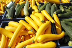 Yellow and green squash for sale. Stock Photography