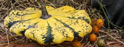 Yellow, green striped and little orange autumn pumpkins in a bowl stock image