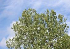 Yellow-green Tree Royalty Free Stock Image