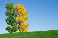 Yellow and green tree in the field stock photos