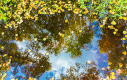 Yellow and green tree leaves in the puddle with reflection of autumn blue sky with cloud. Royalty Free Stock Image