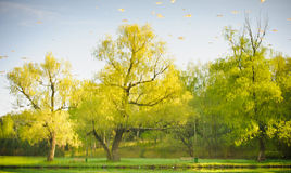 Yellow and green tree reflection Royalty Free Stock Photos
