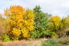 Yellow and green trees Royalty Free Stock Photos