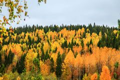 Yellow and green trees in autumn forest, Karelia, Russia. View from above Royalty Free Stock Image