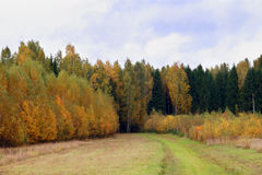 Yellow and green trees on edge of forest Stock Images