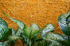 Yellow and green. Green tropical plants on a yellow wall Royalty Free Stock Image