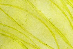 Yellow green Royalty Free Stock Photo