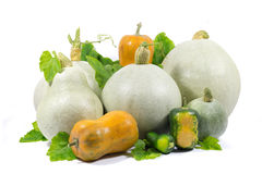 Yellow, Green, White, Small and Big Pumpkins with Green Leaves Isolated on White Stock Images
