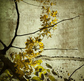 Yellow Grunge Kerala Blossom Art Print Royalty Free Stock Photography