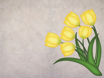 Yellow grunge tulip on textured background. With space for text Royalty Free Stock Photo