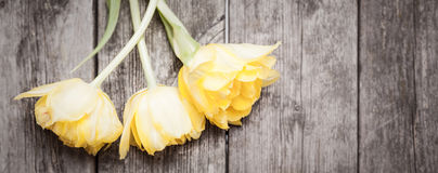 Yellow grunge tulips on wooden background. Banner with tulips on grunge wooden stock images