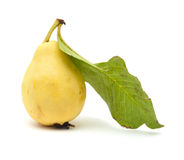 Yellow guava fruit Stock Images