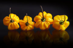Yellow habanero peppers Stock Image
