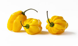 Yellow habanero peppers Royalty Free Stock Photo