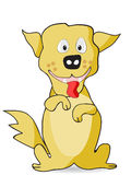 Yellow happy dog Stock Images