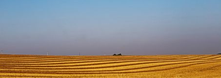 Yellow harvested wheat field. With blue sky in Wales, United Kingdom Royalty Free Stock Photo
