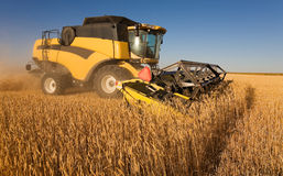 Yellow  harvester Stock Image