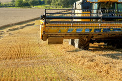 Yellow harvester combine on field harvesting gold wheat Stock Photo