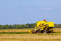 Yellow harvester Stock Photos