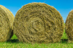 Yellow hay in a field Stock Photography
